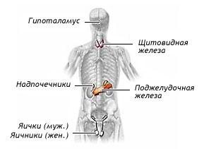 Эндокринология, диетология