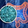 Индивидуальный подбор аутопробиотиков